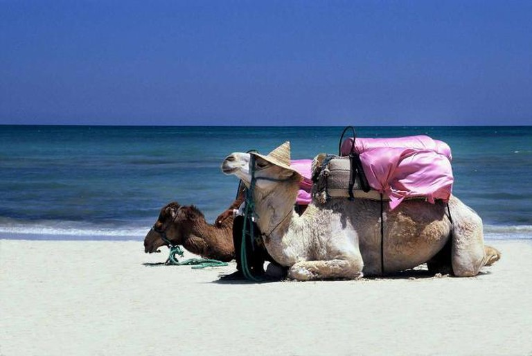 Camel by the beach | © Martin Hapl/Flickr