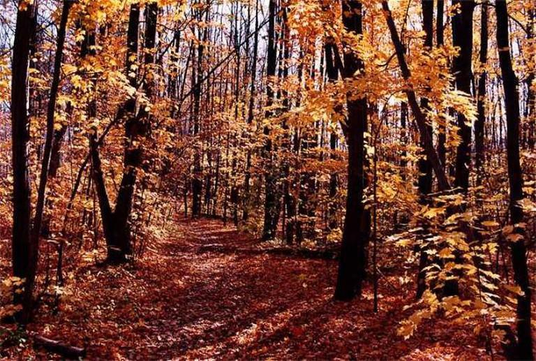 Bruce Trail