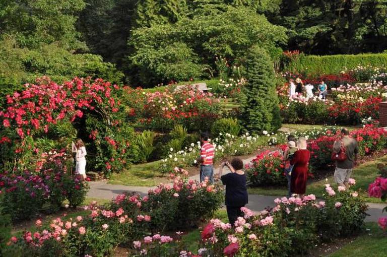 Washington City Park rose garden
