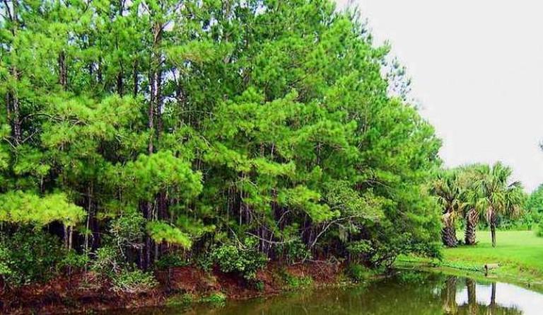 Lake at James Island County Park | © Reellady/Flickr