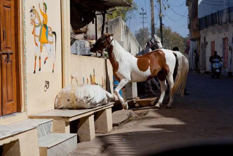 Horse riding in Udaipur | © Ishan Khosla /Flickr