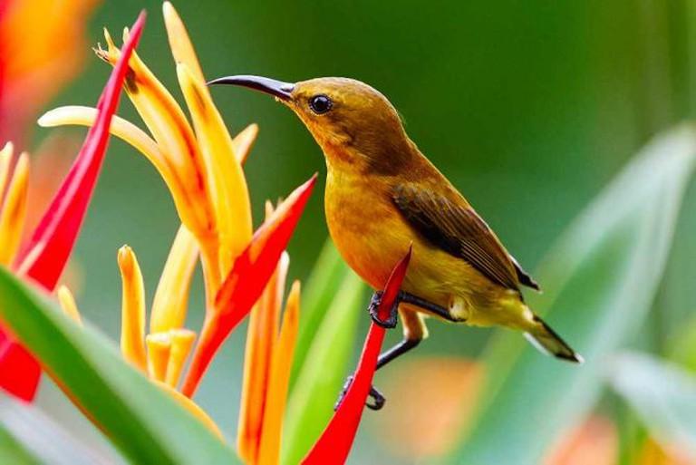 Wildlife at Singapore Botanic Gardens