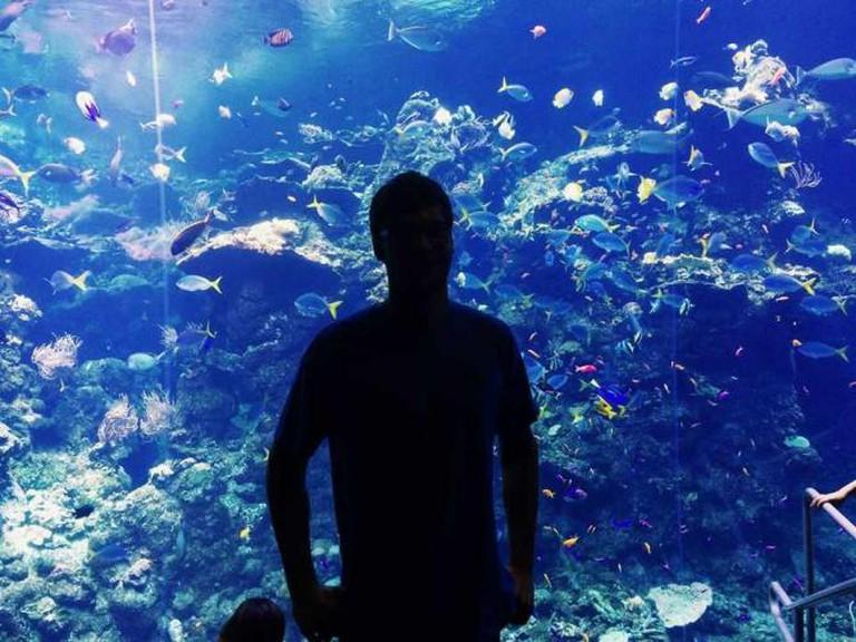 Steinhart Aquarium at the California Academy of Sciences | © Anna Laman