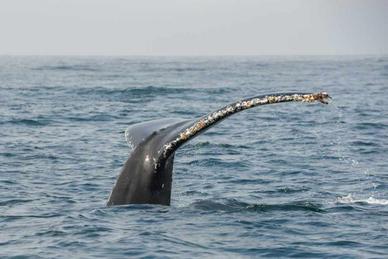 Whale | © Images By John 'K'/Flickr