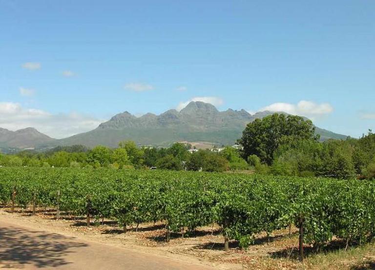 Vignoble à Stellenbosch | © Mister-E/WikimediaCommons