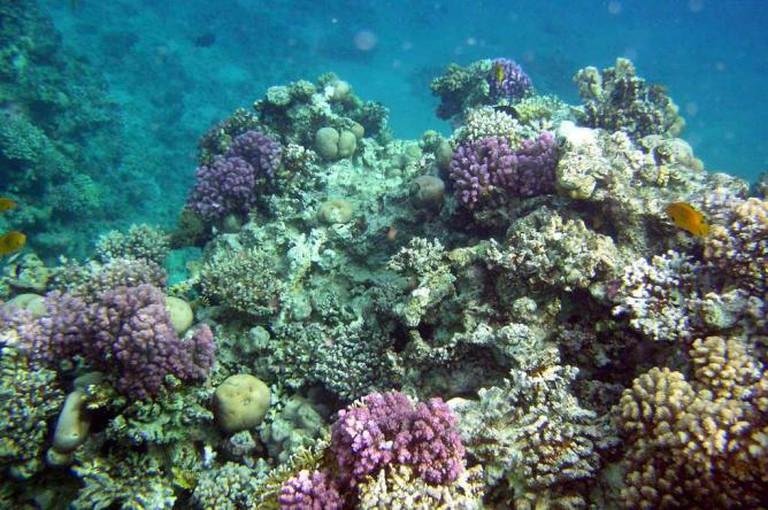Coral reef   © Ian Robertson/Flickr