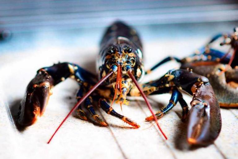 Lobster | © Michael/Flickr