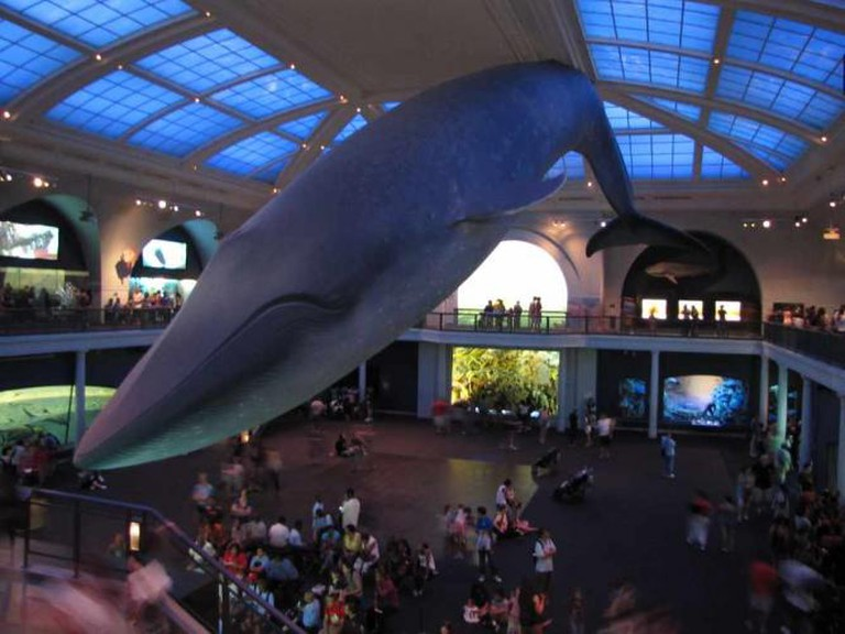Museum of Natural History | © Daniel Torres Bonatto/Flickr