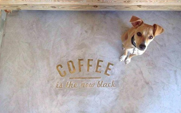 Brew Shop Coffee mascot Gracie | © Brew Shop Coffee