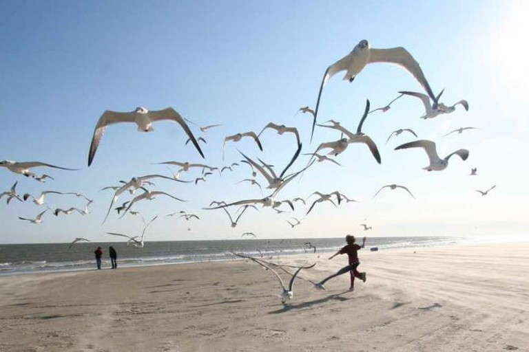 Children at beach, running with seagulls/Sourced from Flickr