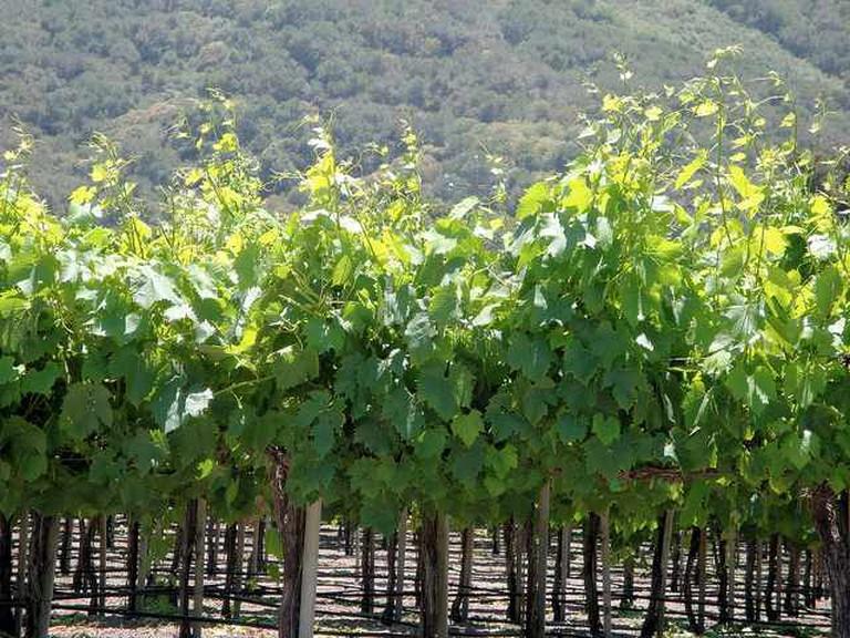 A California coastal winery |  © Jim G/Flickr