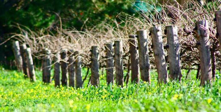 Barossa Valley Vineyard | © Kyle Taylor/Flickr