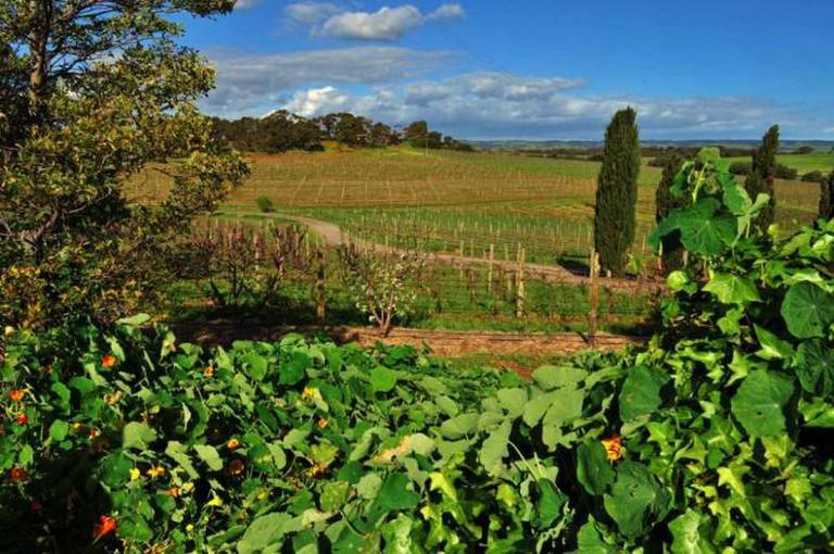 Coriole vineyards | © thinboyfatter/Flickr