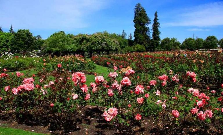 Municipal Rose Garden | © John Menard/Flickr