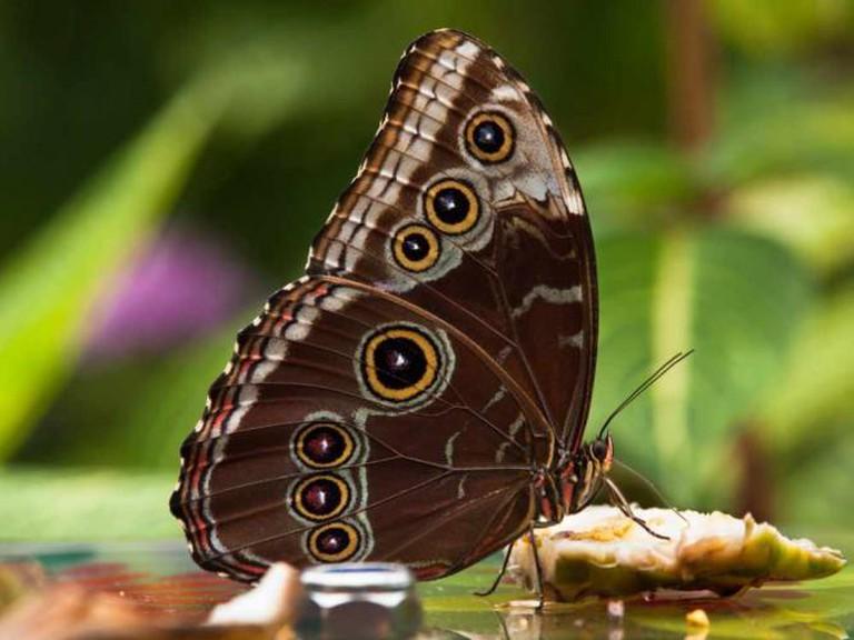 Butterfly | © Darren Copley/flickr