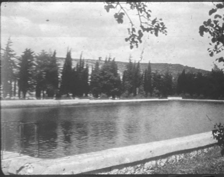 Solomon's Pool