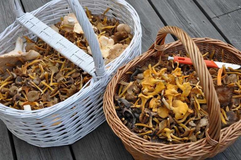 Mushrooms   © Lena Sparring/Pixabay