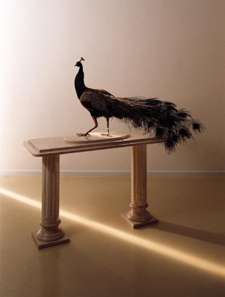 Gideon Gechtman, Peacock, 1999   © The Israel Museum, Jerusalem/WikiCommons