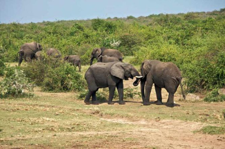 Elephants in Queen Elizabeth National Park, Uganda | © Justin Norton/Flickr
