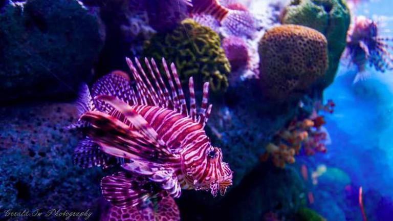 Siam Ocean World | © Gerald Ow/Flickr