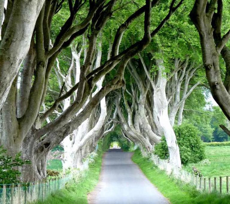 The Dark Hedges, Ballymoney | © murielle29/Flickr