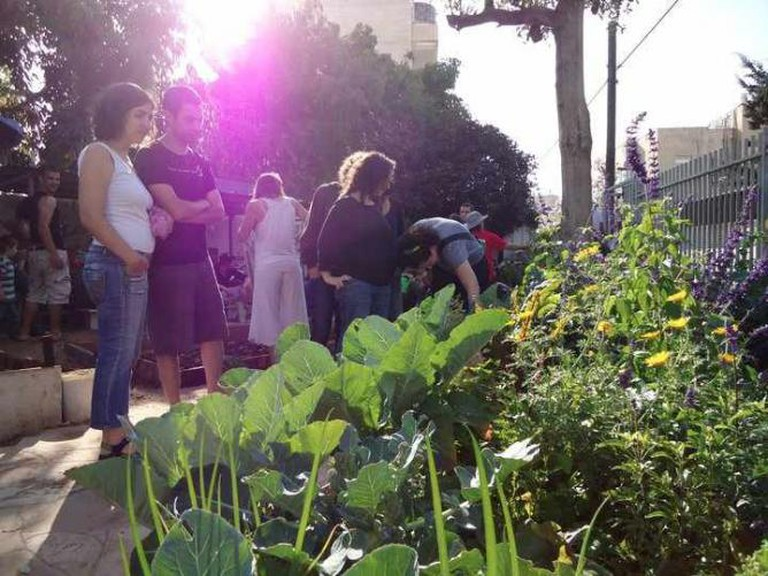 Urban gardening   © HaRav Kuk Community Garden