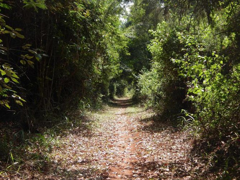A Section of the Biking Trail At Karura Forest   Courtesy Imani Jaoko