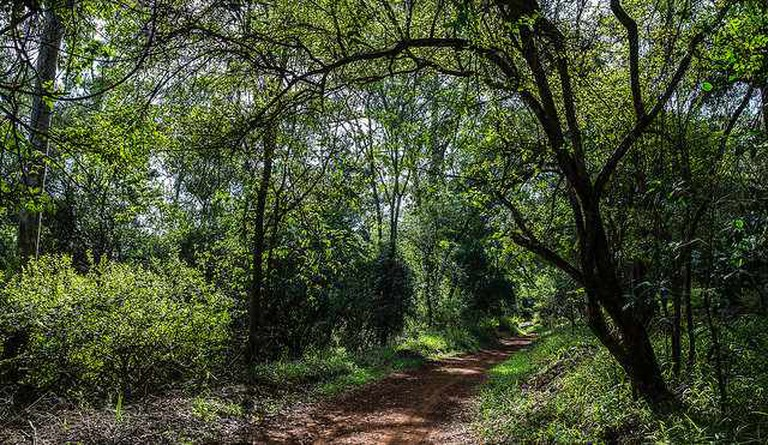 A section of the walking trail at Karura Forest   © Ninara/Flickr