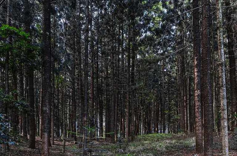 Karura Forest   ©Ninara/Flickr