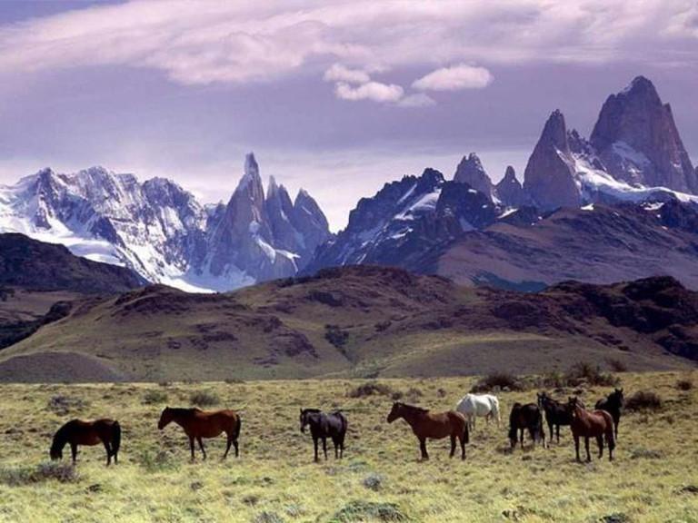 Cavalli al Pascolo, Patagonia © Annalisa Parisi/Wikicommons