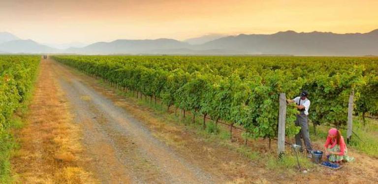Photo Courtesy of Plantaže Wines