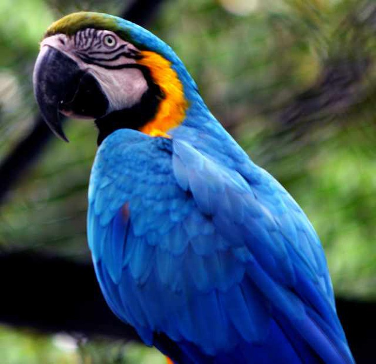 Macaw, Paraguay