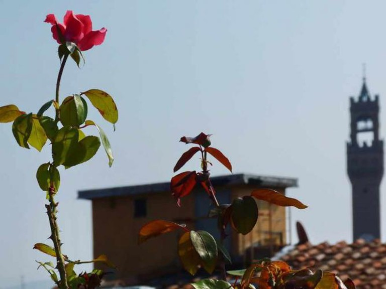 Una rosa per Firenze | © sansa55/Flickr
