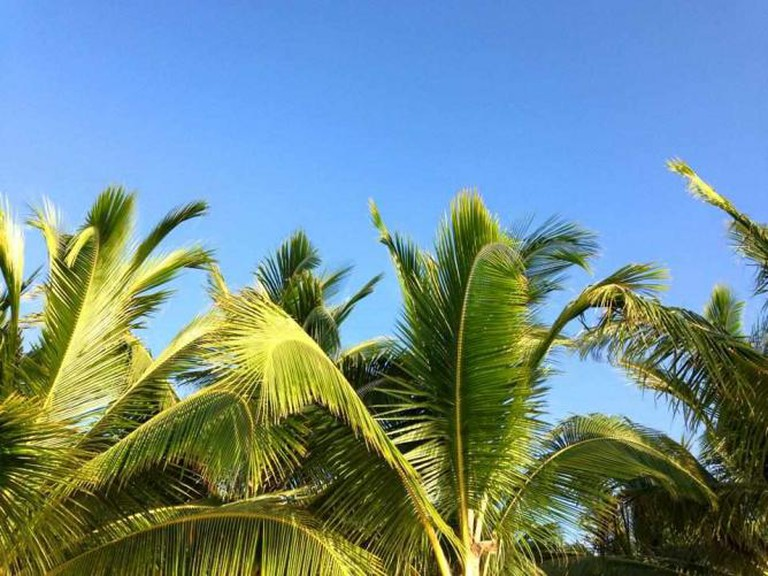 Palm trees in Cozumel | courtesy of Lauren Cocking