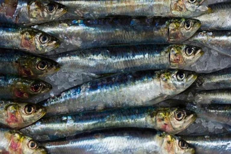 Fresh fish are guaranteed at Feluka