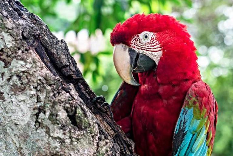 Parrots of Las Mercedes