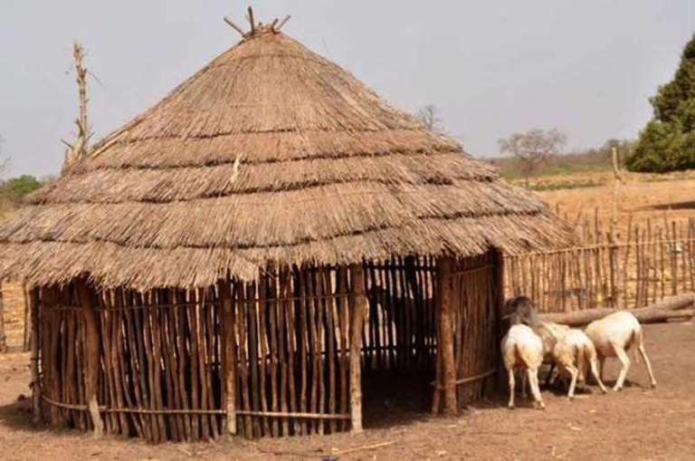 Gambia — A shed constructed with wood branches and thatch roof made for livestock in the Fula village of Banjulingding. (submitted by Heather Kargbo)