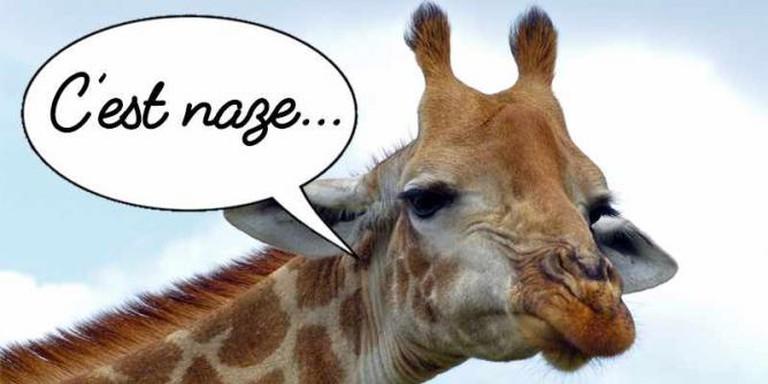 Giraffe frown | © Bernard DUPONT/Wikimedia Commons
