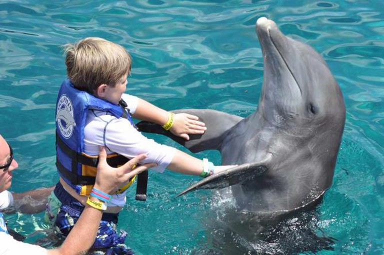Swimming with dolphins ©Josh Grenier/Flickr