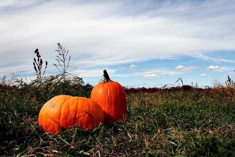 Pumpkins   © Caitlin Regan/Flickr