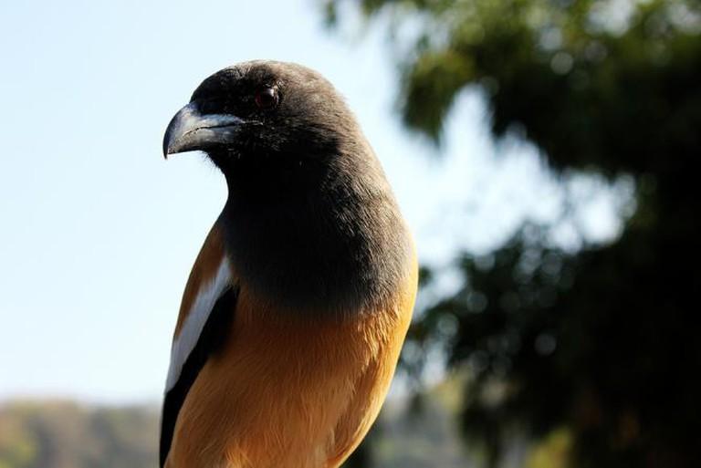 Birds in Sariska National Park near Alwar in Rajasthan, India | © A frequent Traveller