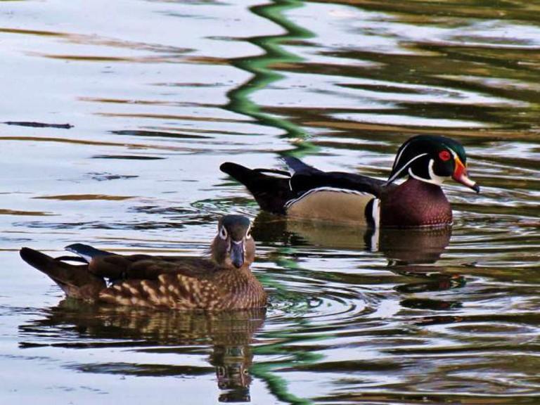 Wildlife at Roeding Regional Park | © Amanda Champ/Flickr