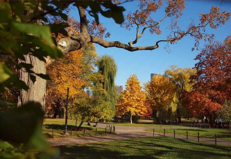 Boston Common Trees 2 © H. Michael Karshis/ flickr