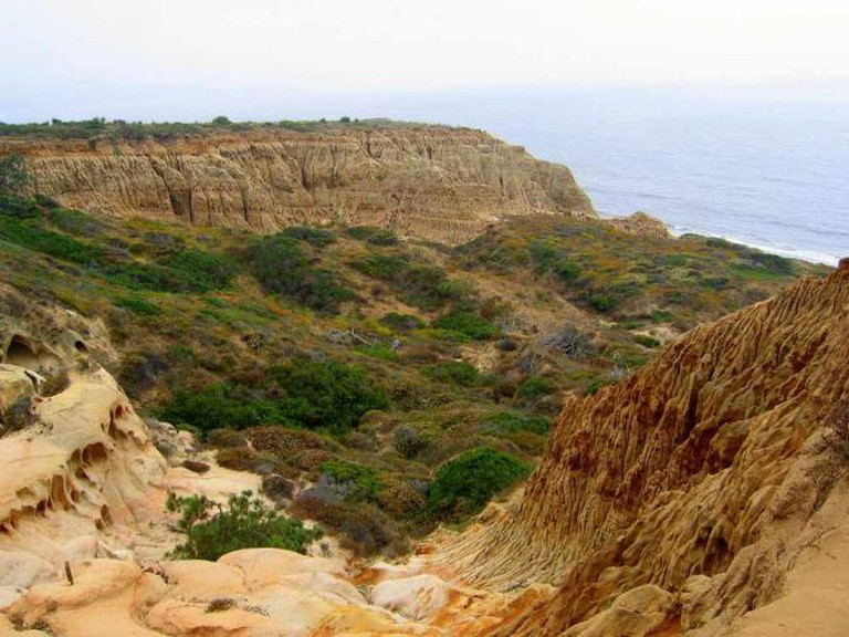 Torrey Pines State Reserve   WikiCommons