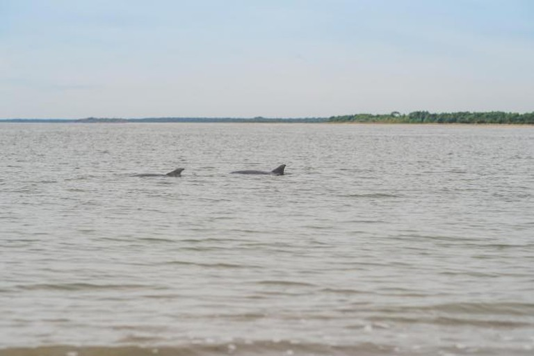 Dolphins off Seabrook Island | Courtesy of Obviouslee Marketing