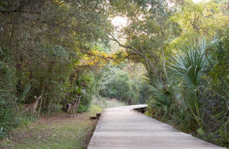 Live Oaks in Seabrook Island | Courtesy of Obviouslee Marketing