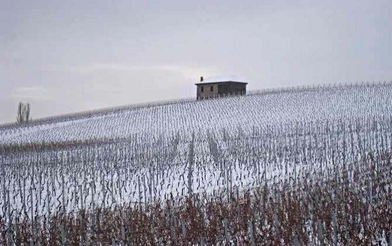 Vineyards In Winter | © Sarah/Flickr