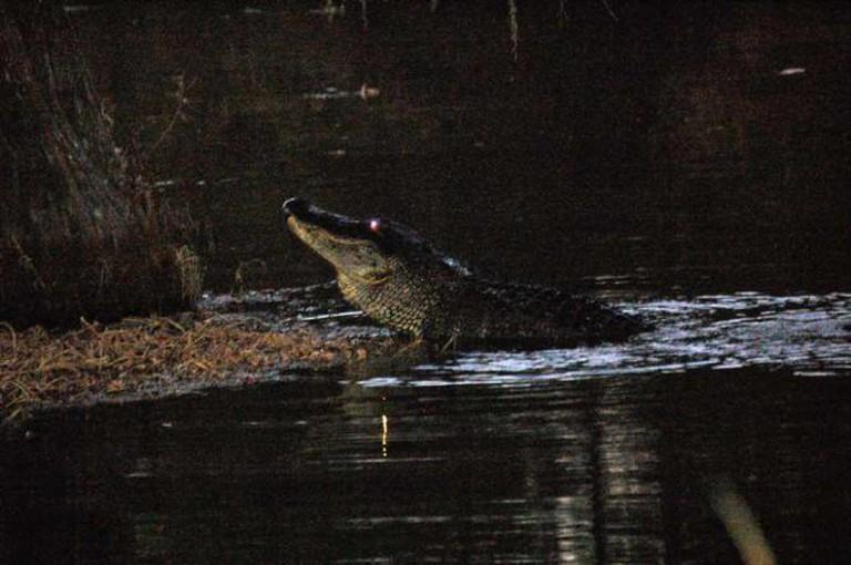 Gator | ©jc.winkler/Flickr