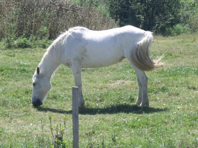 Horse at Carmargue Nature Park