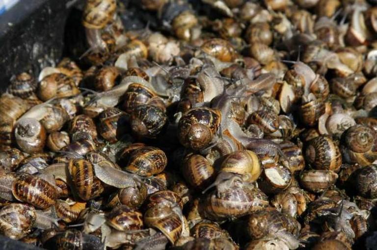 Le Marche d'Arles Snails